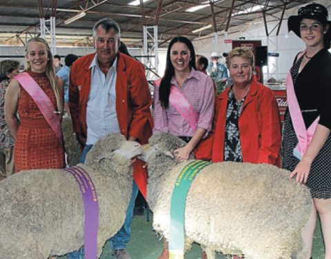 Champion Merino Ewes at Longreach Show