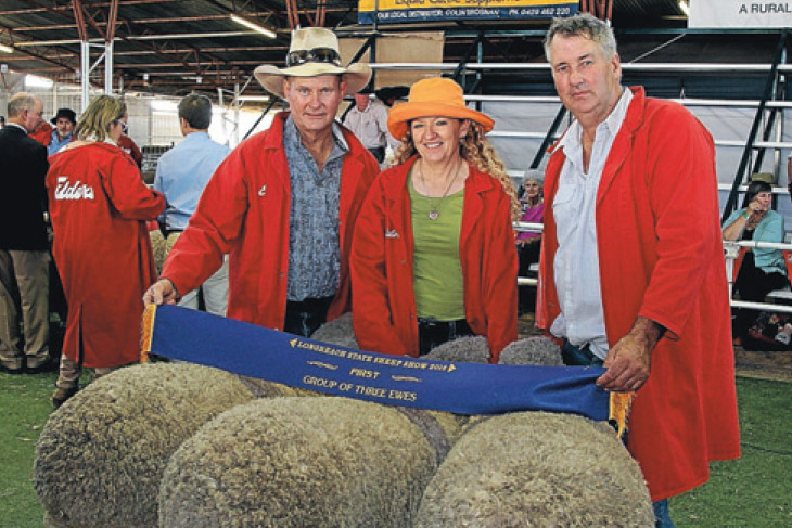 Group of 3 Ewes at Longreach Show
