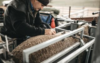 Raw Data collection for Merino Sheep