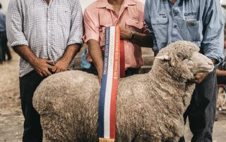 Grand Champion August Shorn Ewe and Grand Champion Medium Ram at Canberra CSSM