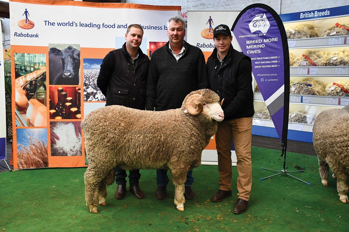 Horn Sale Ram Collinsville 180641 Hay Sheep Show 2019